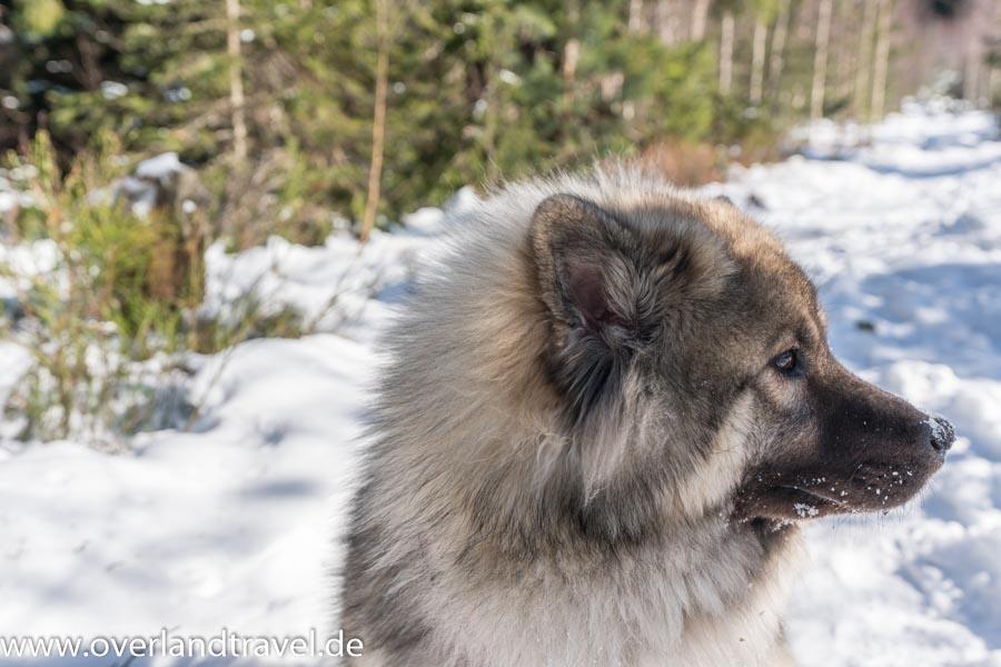 a7r3 16 35 f2.8 winter sony alpha 7r iii Eurasier hund winter schnee